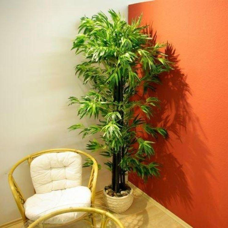 La pianta nella foto � un bamb� da 190 cm con tronco in vero legno e foglie in poliestere