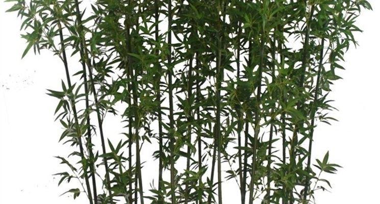 Piante finte da esterno piante finte piante da esterno for Piante artificiali