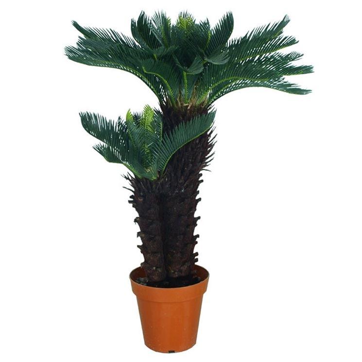 Piante finte da esterno piante finte piante da esterno for Piante da esterno