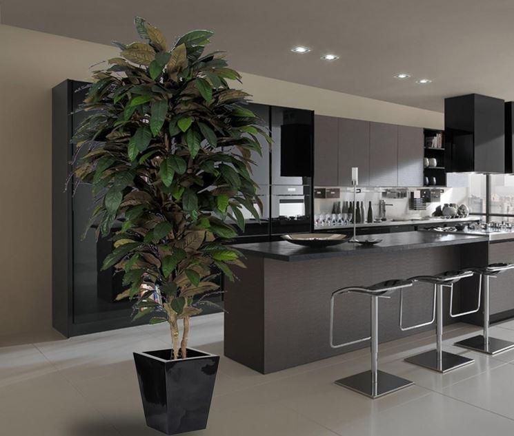 piante da appartamento piante da interno : Zamioculcas Flower Related Keywords & Suggestions - Zamioculcas Flower ...