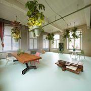 Un ufficio con molte piante