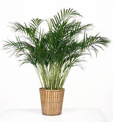 Pianta finta con vaso costituito da cesto in vimini