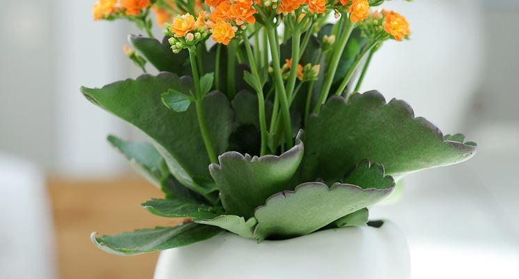 Fiore finto in vaso di ceramica