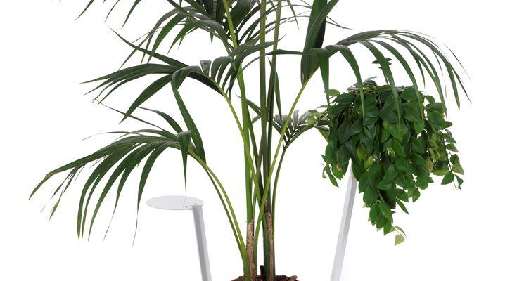 Mangrovia finta indistinguibile dall'originale