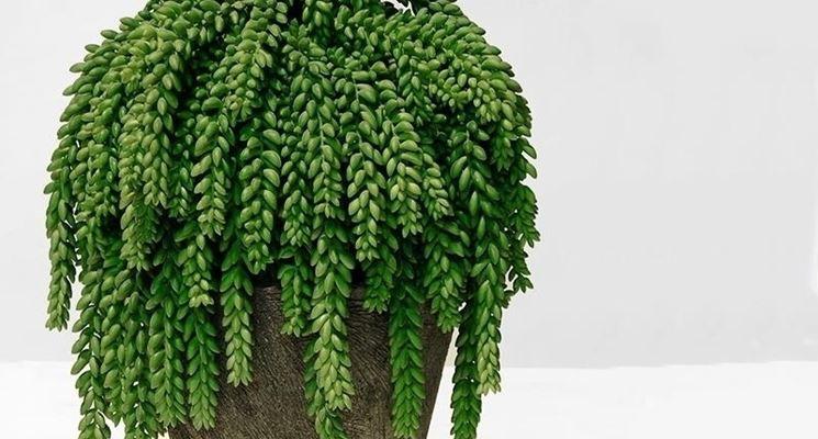 Piante grasse finte piante finte come scegliere le - Piante grasse da esterno pendenti ...