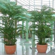 Greencomposition