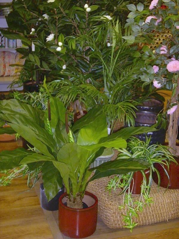 piante ornamentali finte piante finte caratteristiche