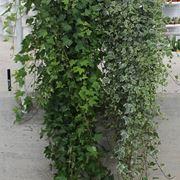 piante da appartamento poca luce