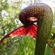 pianta insettivora