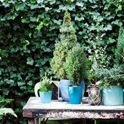 piante sempreverdi da balcone