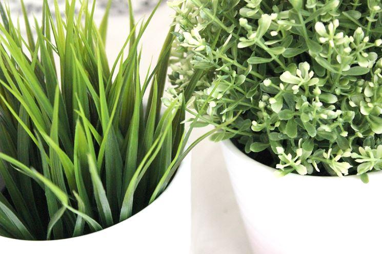 Piante artificiali prezzi acquario piante artificiali for Piante da frutta nane prezzi