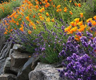 Giardinaggio for Piante perenni