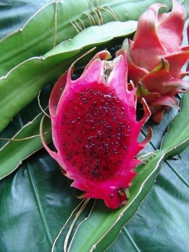 Frutto di Pitahaya